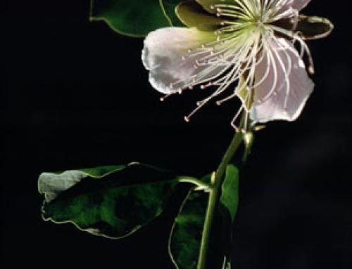 Nature wears delicate beauty